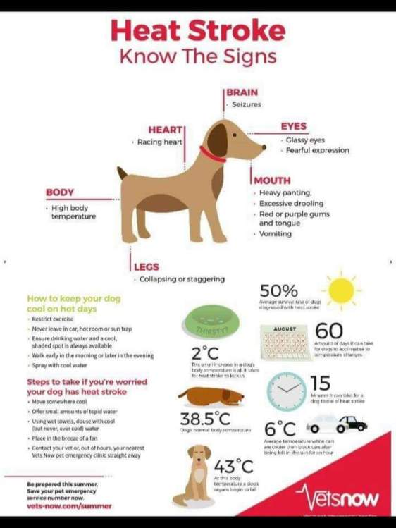 heat stroke graphic
